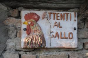 azienda-agricola-gallo
